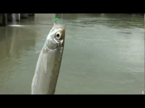 Pescuit oblete la Bascov cu muste artificiale,mai 2012.