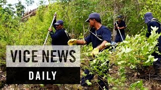 VICE News Daily: Coca Cultivation Surges in Colombia - VICENEWS