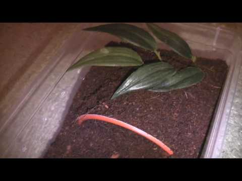 Spiderling Care Video
