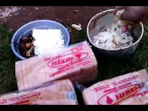 Roti Tawar Pakan Alternatif untuk Ayam Bangkok