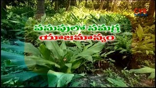 Tamarind Farming Information Guide | Agriculture Students Guidelines | Srikakulam | CVR News - CVRNEWSOFFICIAL