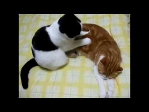 Conversa de Gatos - Massagens Românticas