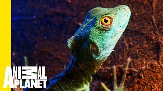 What Exactly Is a Lizard? - ANIMALPLANETTV