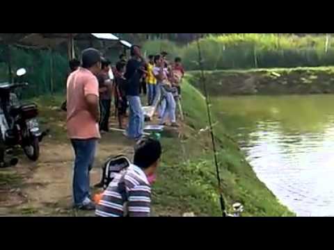 Kolam Pancing Ikan Air tawar Sungkai Perak. tongsan