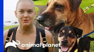 Amanda Takes 3 Adorable Rescue Dogs Out On A Field Trip | Amanda To The Rescue - ANIMALPLANETTV