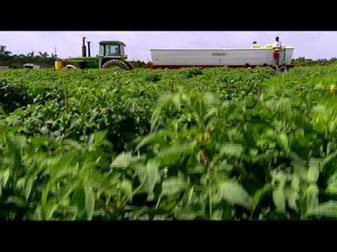 """Farming the Sea"" Pt. 2"
