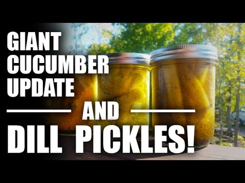 GGC - 66 - A Giant Armenian Cucumber and Homemade Dill Pickles