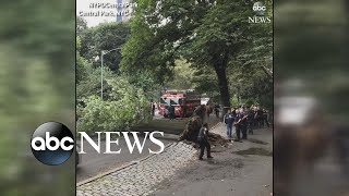 4 injured after huge tree falls in NYC's Central Park - ABCNEWS