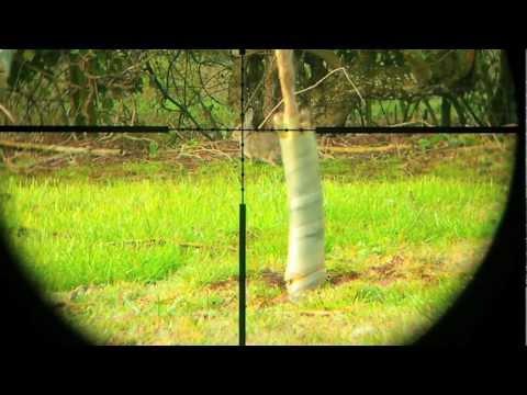 Air rifle Rabbit hunt Air Arms S200 July, 2012!