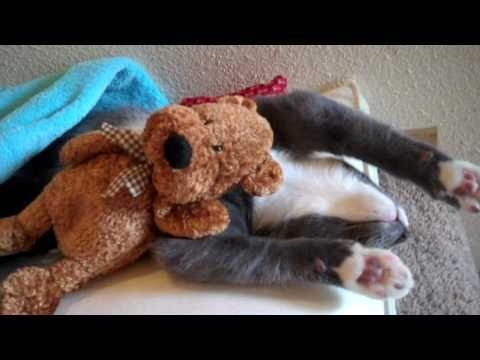 Cute Kitten Hugs His Teddy Bear EXTENDED VERSION