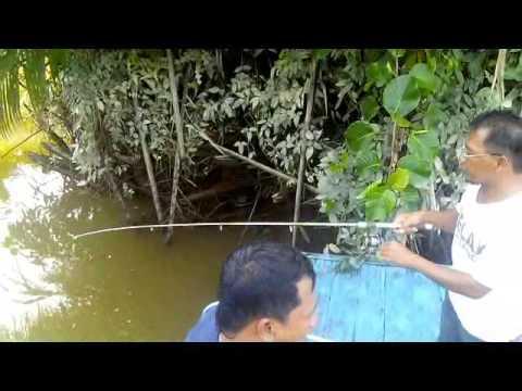 Memancing udang galah di delta sungai mahakam | full movie