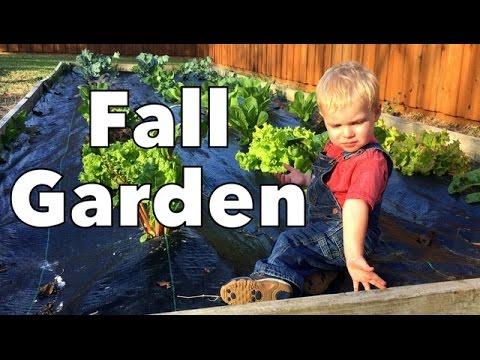 Fall Garden Tour & GreenStalk Update & More