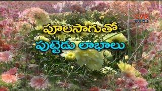 Farmers Earn Profits By Flowers Farming | East Godavari | CVR News - CVRNEWSOFFICIAL