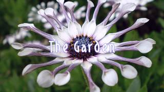 Royalty Free :The Garden