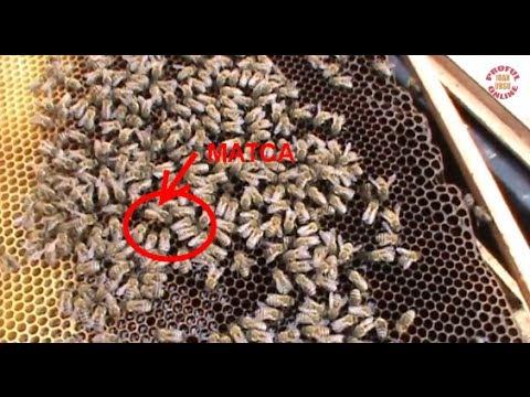 1/3 Criterii evaluare matci - Analizam 3 familii de albine la vagonul scoala - apicultura incepatori