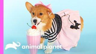 100 Years of Puppies: Puppy Bowl Edition - ANIMALPLANETTV