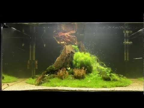 &quot;Nature's Chaos&quot; Aquascape by James Findley - The Making Of