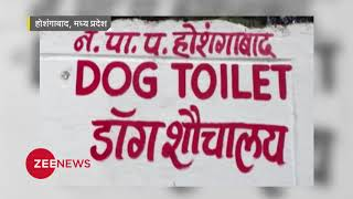 MP: India's first doggy toilet to be build in Hoshangaba| होशंगाबाद में बना डॉग टॉयलेट - ZEENEWS