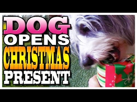 Holiday 2011: Christmas Gifts for Dogs
