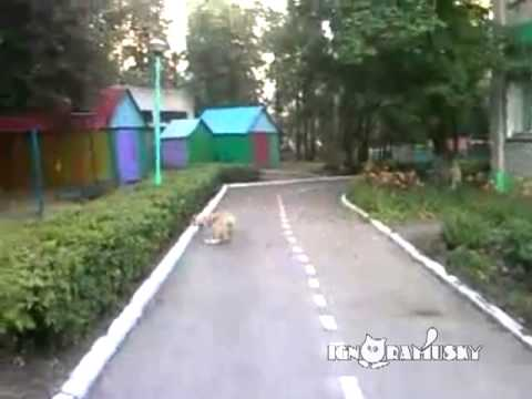 Cão encontra o seu amigo gato morto...