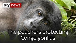 Poachers-turned-policemen protecting Congo gorillas - SKYNEWS