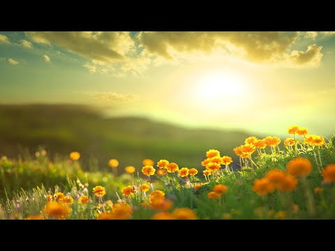 Morning Relaxing Music - Positive Feelings and Energy