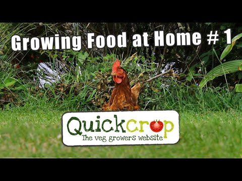 Growing Food at Home # 1