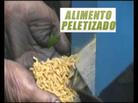 PELETIZADORA  para alimento balanceado modelo PL10.avi