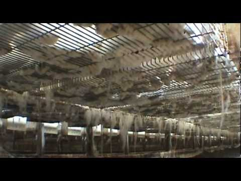 Investigation: Intensive rabbit farming
