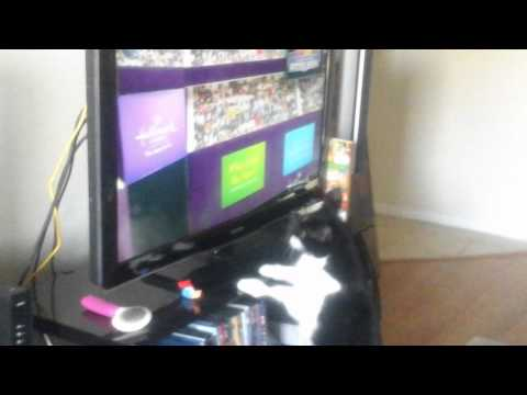 Must See Cat Intrested in Kitten Bowl 2014
