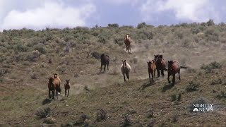 Drought Has Endangered Horses, But One Organization Is Determined To Help | NBC Nightly News - NBCNEWS
