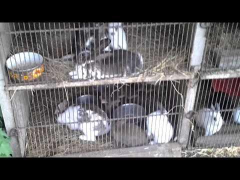 [Conseil,lapin] l'élevage des lapereaux :D ♥