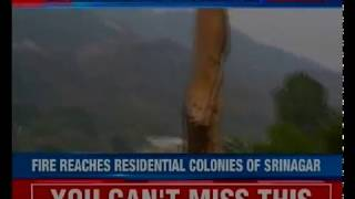 Scores of animals killed due to forest fire; will authorities take action now? - NEWSXLIVE