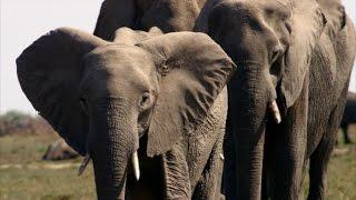 The Savuti Brings Out Africa's Giants - ANIMALPLANETTV