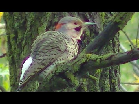 Stunning Birding and Wild Birds - Singing , Feeding, Identification & More