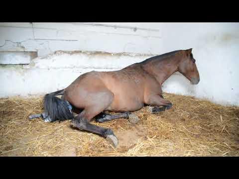 Parto LUMINOSA DN foaling - 28/04/2013