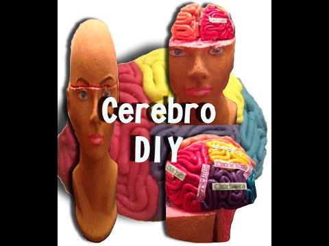 DIY Cerebro de plastilina (Playdough brain)