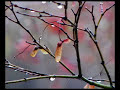 So Fell Autumn Rain