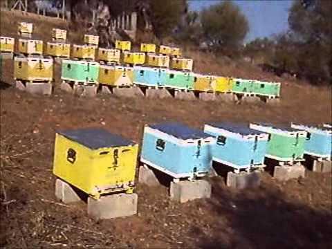 μελισσοκομειο μελι γυρη κερι προπολη βασιλικος πολτος