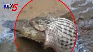 Must Watch!! How a Snake Struggle to Swallow Fish : TV5 News - TV5NEWSCHANNEL