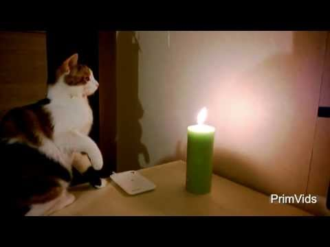 VB : Gatos e velas