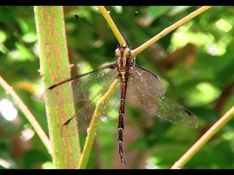 Unkown strange creature_not dragonfly nor butterfly