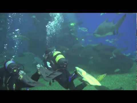 Buceando con Tiburones en Mallorca | Diving with Sharks in Majorca