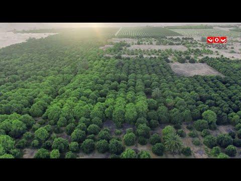 جولة في أكبر مزرعة في اليمن ...  تحتوي على 90 الف شجرة برتقال وآلالف الأشجار الأخرى | في ضيافة سبأ