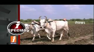 Agriculture Cultivated Crop not Support Price ? | i Special | iNews - INEWS