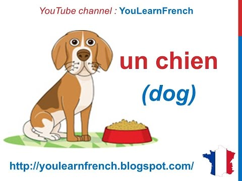 French Lesson 58 - Les animaux (Names of animals in French) + pronunciation