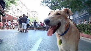 بالفيديو.. وفاة الكلب «لوكانيكوس» المتظاهر ضد التقشف