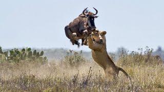 Животные, у которых получилось избежать гибели.