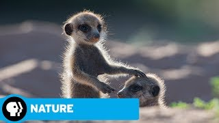 NATURE | Animals with Cameras, Episode 1: Official Trailer | PBS - PBS
