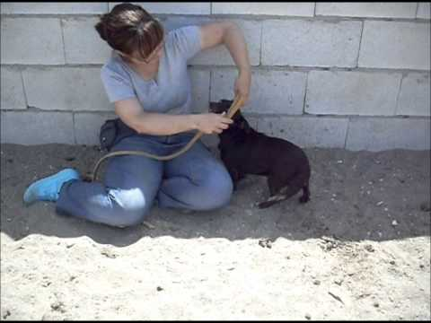 Animalinneed: Video of Chula